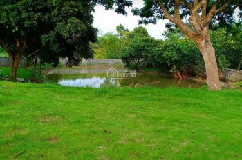 Bán nhà vườn Lương Sơn, có nhà, vườn cây, ao cá