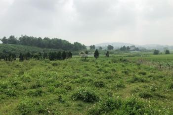 Cần bán 5540m2 đất trang trại nhà vườn có ao, view cánh đồng tại Hòa Sơn, Lương Sơn, Hòa Bình