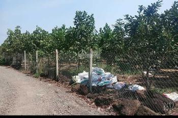 Bán 5 sào 8 đất trồng cây ăn trái, Xuân Phú, Xuân Lộc, Đồng Nai