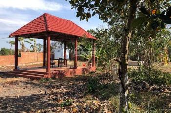 Bán nhanh 3.565m2 (300m2 thổ cư) đất vườn trái cây tại xã Long Phước, TP Bà Rịa