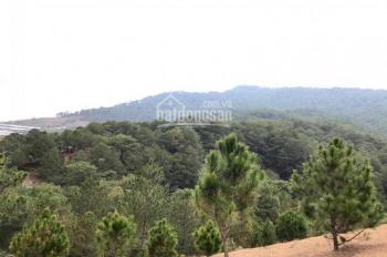 Chính chủ cần bán 2500m2 đất NN ngay cổng KDL Langbiang, view siêu đẹp, 3.3 tỷ