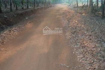 10 mẫu đất cao su tại Hớn Quản, Bình Phước