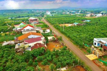 Bán đất sào nghỉ dưỡng giá rẻ - Đambri - Bảo Lộc (4400m2 một lô - 4 sào 4)