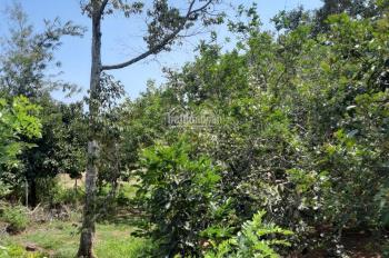 Bán vườn trái cây xã Xuân Đường, huyện Cẩm Mỹ, tỉnh Đồng Nai