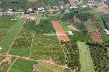 Bán lô đất rộng 1 ha 2 m2 xây nghỉ dưỡng hẻm đường Lý Thái Tổ #damry,Tp Bảo Lộc