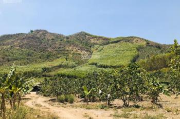 Bán trang trại trồng cây ăn quả 1 hecta ở Diên Tân - Diên Khánh. LH: 0917368345