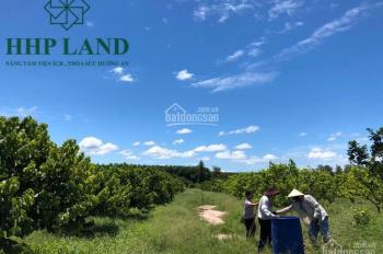 Bán 2ha đất vườn na Thái thuộc Suối Cao, Xuân Lộc, thích hợp mua đầu tư, canh tác, 0949355488 Hải