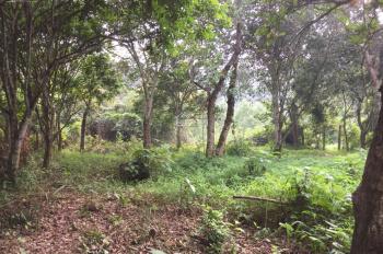 1200m2 bám suối gần Quốc lộ 6, Lương Sơn, Hoà Bình cần bán gấp