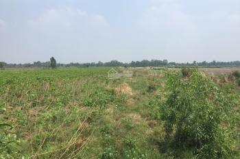 Chính chủ cần bán lô đất dt 7000m2, đất trồng cây hàng năm, ở Tân Hòa, Bến Lức, Long An