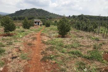 Bán vườn sầu riêng Long Khánh, 10000m2, 0961777718