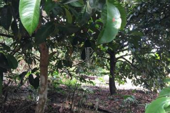 Bán vườn trái cây lâu năm mặt tiền sông xã Trung An, Củ Chi