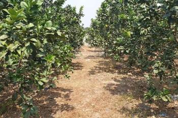 Bán nhà vườn trái cây xã An Phước, Long Thành, Đồng Nai