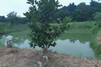 Siêu phẩm nhà vườn Hòa Lạc 3000m2, giá chỉ 4,6 tỷ