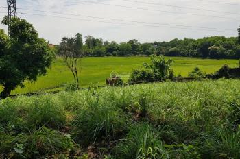 Nhượng 3194m2 đất trang trại nhà vườn view cánh đồng, 3 mặt tiền tại Hòa Sơn, Lương Sơn, Hòa Bình