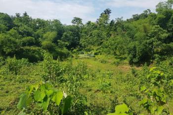 Bán 5400m2 đất trang trại nhà vườn cao, thoáng tại Hợp Hòa, Lương Sơn, Hòa Bình
