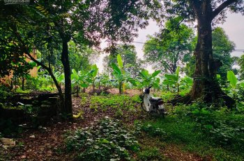 Chính chủ cần bán 2ha đất tại Xã Liên Sơn, Lương Sơn, Hòa Bình