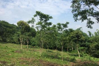 Cần chuyển nhượng lô đất 4400m2 làm biệt thự nhà vườn, giá rẻ nhất tại Hợp Hòa, Lương Sơn, Hòa Bình