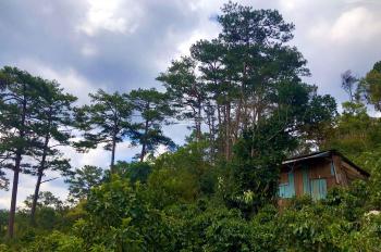 Bán giùm anh chị cạnh nhà, lô đất 6.000m2 thuộc ngoại ô Đà Lạt 850tr vườn cafe, hồng, bơ và nhà gỗ