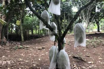 Bán 8,7 sào đất trồng cây ăn trái xã Bảo Bình, Cẩm Mỹ, Đồng Nai, giá 280tr/sào