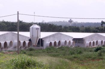 Bán trang trại công nghệ cao xây dựng 10 ha đang cho thuê 500 triệu 1 tháng. Cọc 1 năm