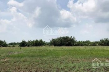 Bán đất nông nghiệp xã Phú Đông, 1000m2 đất vườn, đối diện Vingroup