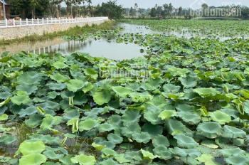 Lô góc đất nền 2 mặt đường rẻ nhất Hòa Lạc gần hồ sen Lotus chỉ hơn 1 tỷ sổ đỏ nhận ngay
