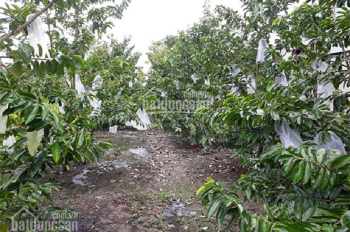 Bán đất vườn đường 6m Hà Duy Phiên, xã Bình Mỹ, Củ Chi, 590m2, giá 1,35 tỷ
