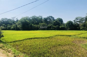 Bán gấp 1110m2 đất thổ cư giá rẻ, huyện Lương Sơn, Hoà Bình