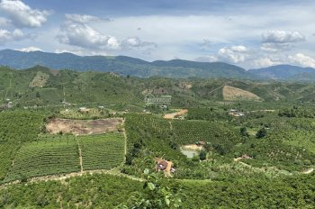 14.650m2 đất view đồi Bảo Lộc, đường ô tô giá 2.4 tỷ