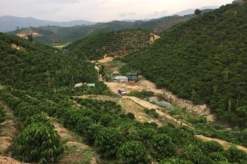 Bán đất nghỉ dưỡng view đồi đẹp diện tích 15000m2, TP Bảo Lộc