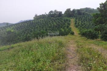 Bán gấp trang trại 22ha đang trồng cam, bưởi tại thị trấn Lương Sơn, Hoà Bình. Giá rẻ