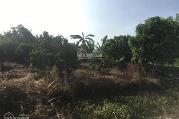 Bán 3000m2 đất xã Tân Hội, TP Vĩnh Long. Giá chỉ 700tr/1000m2
