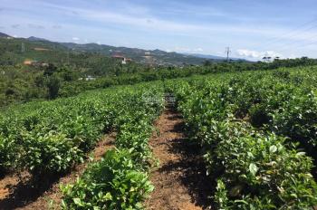 Bán đất nghỉ dưỡng mặt đường Quốc Lộ 20 giá rẻ ,view đẹp TP Bảo Lộc