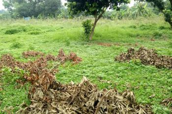 Cần bán 9002m2 đất thổ cư, đất vườn Hòa Sơn, Lương Sơn, Hòa Bình