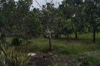 Cần bán nhanh 3.3ha vườn trái cây, Bảo Quang, Long Khánh, ĐN, giá 370tr/sào(TL), LH: 0846339579