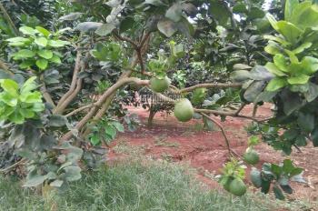 Cần bán hơn 5 sào đất vườn trái cây và ao cá, 2 mặt tiền đường 8m, Xã Đá Bạc