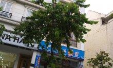 Cho thuê khách sạn khu Phú Mỹ Hưng, gồm 41 phòng giá hợp lý 0903 676 074 / 0934 399 147