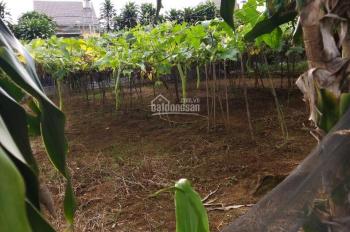 Chính chủ cắt lỗ 80tr lô đất 6x21 hẻm Phan Đình Phùng, P2, Tp Bảo Lộc