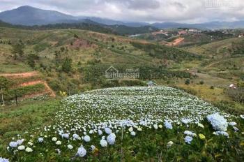 Cần tiền bán gấp đất nông nghiệp tại Đa Nhim, Lạc Dương, 8000m2