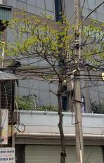 Cho thuê nhà Trung Kính, mặt phố, phường Trung Hòa, Cầu Giấy 65m2, 6 tầng, 43tr/th
