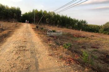 Chính chủ bán 1000m2 đất vườn Xã Phước Bình - Long Thành, chỉ 950tr/1000m2