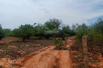 Cần bán lô đất DT 27000m2, xã Thiện Nghiệp, thành phố Phan Thiết, Bình Thuận