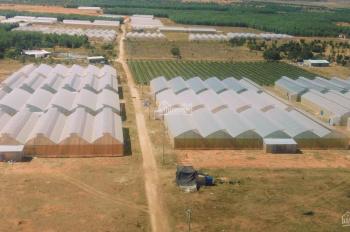 Cần bán đất sổ đỏ chỉ 50,000đ/m2 tại Bắc Bình, Bình Thuận, công chứng sang tên ngay