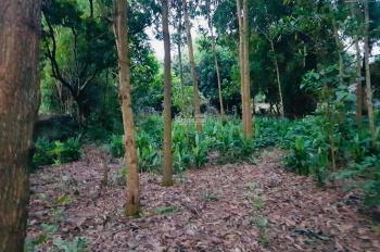 Bán đất thổ cư vuông vắn giá siêu rẻ tại Lương Sơn, Hòa Bình diện tích 1000m2 chỉ 650 triệu