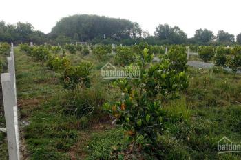 Đất vườn Củ Chi 1,5tr/m2 đã có cây ăn trái sẵn