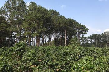 Chính chủ cần bán Đất vườn xã Xuân Trường - TP Đà Lạt