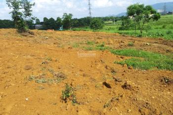View cánh đồng lúa chín, thoáng đẹp, đất thoải, gần nhiều khu Resort nổi tiếng