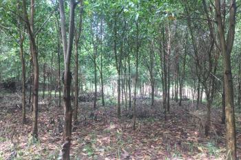 Cần bán lô đất 3100m2 vị trí vô cùng đắc địa views cánh đồng tại Hòa Sơn, Lương Sơn, Hòa Bình