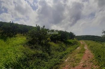 Bán gấp 30ha đất Lương Sơn HB đã trồng cam, bưởi, có hồ, có suối, đường BT ô tô đi lại thoải mái