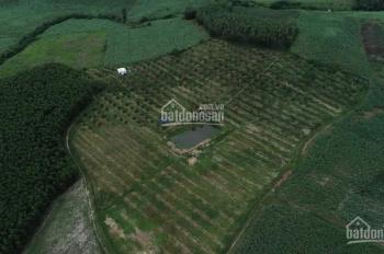 Bán đất đã trồng cây ăn trái 350tr/ha tại Ninh Thượng. lh 0702565031